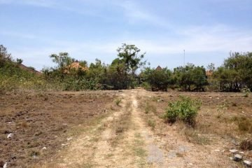 Prime Batu Belig Leasehold Land 10 Are, IDR 16.000.000 / are / year
