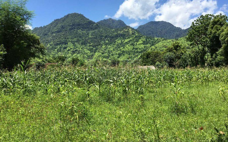 North of Bali Pemuteran –  Perfect Plot of 32,5 Are Freehold Land – Stunning Mountain Views