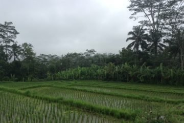 Excellent Investment Opportunity  661 Are Freehold Land North of Ubud