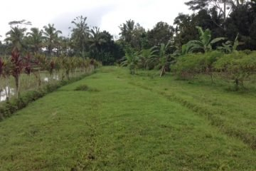 90 Years Lease for 2 Beautiful Blocks of Land near Tegallalang
