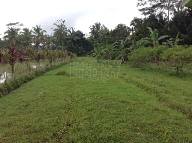 81 Years Lease for 2 Beautiful Blocks of Land near Tegallalang