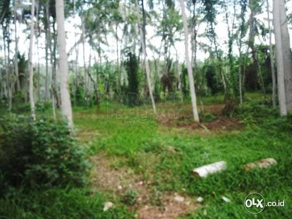 Well Priced Leasehold Land 140 Are – Gianyar Regency – Desa Selat