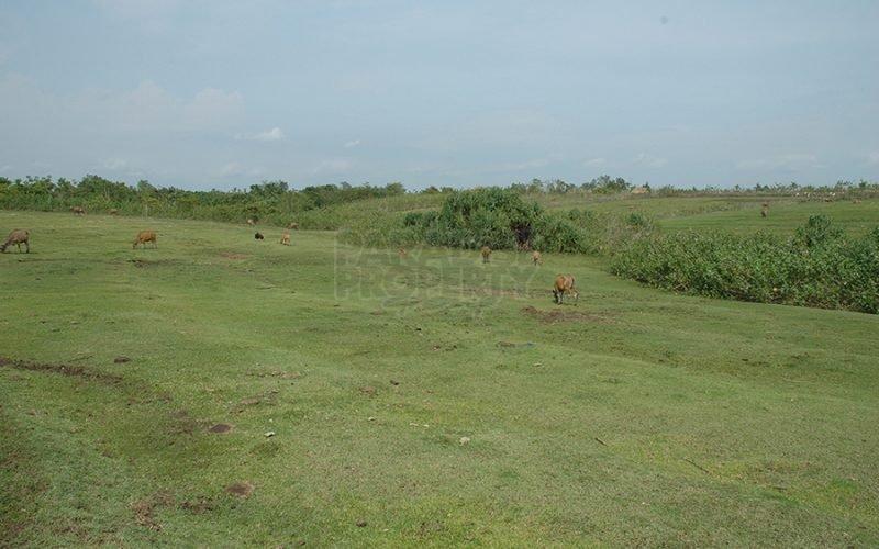 Dijual Tanah Seluas 39 Are di Pantai Nyanyi, Tabanan