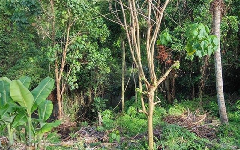 Large Land In Tabanan Close To A River