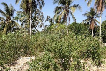 Exclusive Piece of Freehold Land for Sale – Nyanyi Beach