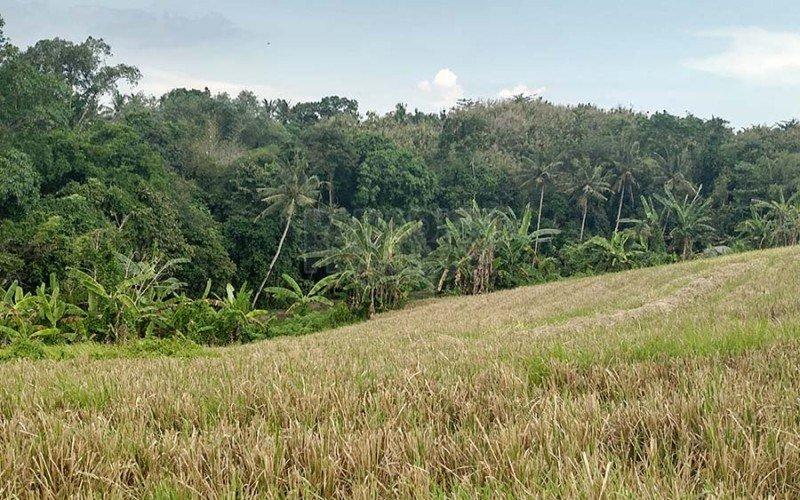 Freehold Berembeng – Tabanan Land with Ocean Views