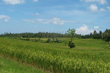 3800m2 Freehold Land with Panoramic Rice Paddy Views