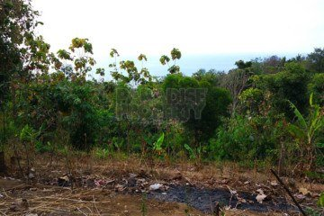 Amazing 49 Are Freehold Land with WOW View in Lovina