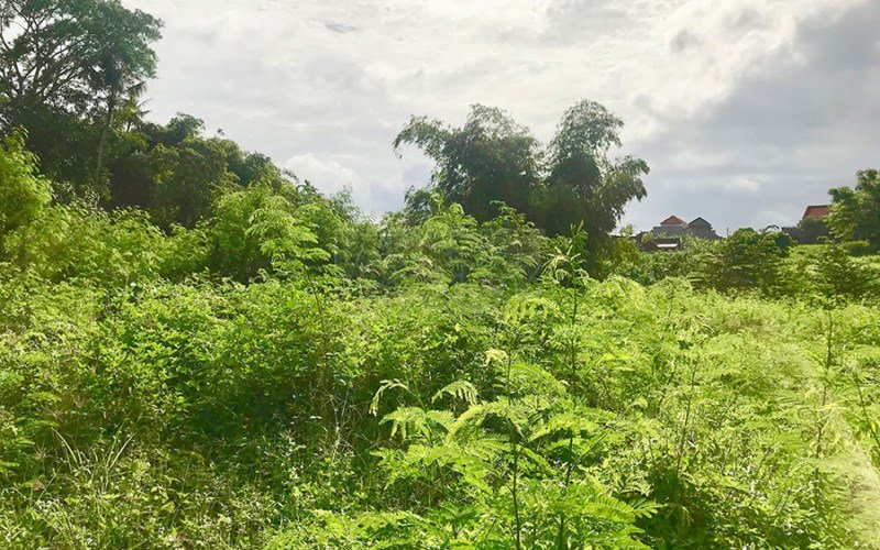 Freehold Land for Sale in Kayu Tulang – Canggu