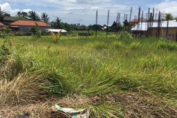 Prime Freehold Land Investment Opportunity