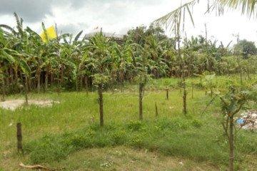Dijual Tanah SHM / Freehold di Kedonganan, Jimbaran