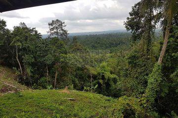 Dijual Tanah Luas 1.3 Hektar di Tabanan