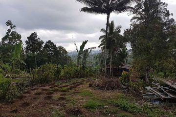 Huge 1.3 Hectare Development Site For Sale In Tabanan