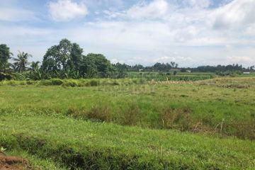 Peluang Investasi Tanah di Kedungu