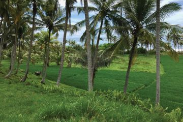 Absolute Beachfront Balian – 10,450m2 Surrounded by Rice Terraces