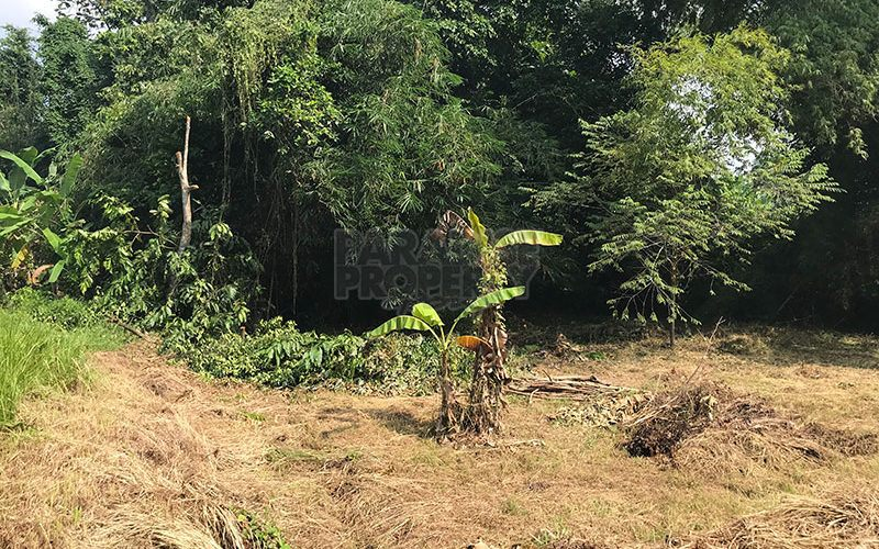 Great Riverside Freehold Land in Kedungu – Tanah lot