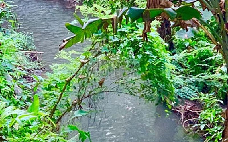 A True Gem – Prime 5600m2 Leasehold Land  – River View – Great Location South of Ubud