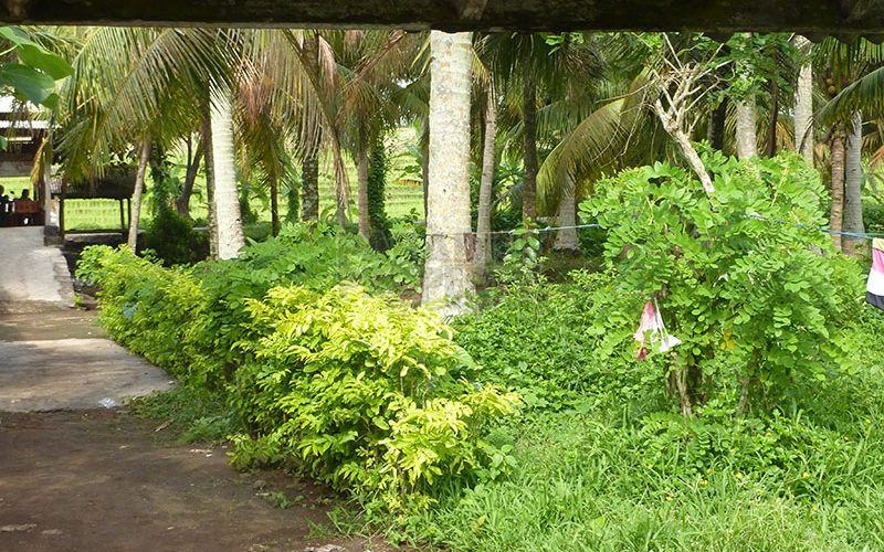 Bargain – 1010m2 Beachfront Land In Jembrana