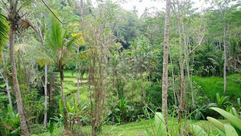 25 Are Freehold Land For Sale in Tegalalang, Ubud
