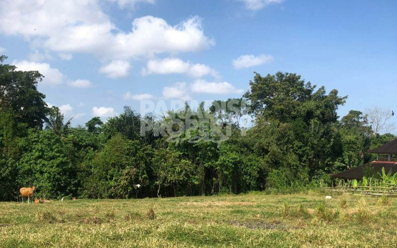 3000m2 Leasehold Land within the Hotspot Area of Pererenan